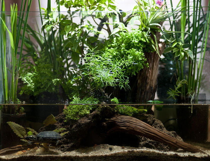 15-gallon what-started-out-as-a-riparium, but changed quickly into a ... 10 Gallon Paludarium
